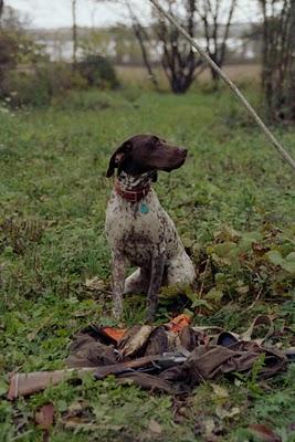 Artemis 1st Woodcock hunt